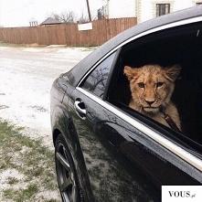 chce takiego pasażera :)