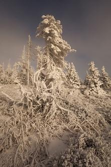 Pierwszy dzień zimy z 88 dni*