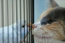 Z okazji nadchodzących świąt daj buziaka :-)