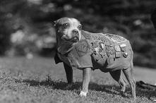 Pies, który został żołnierzem podczas I wojny światowej. Czytaj więcej na por...