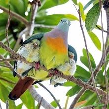Matka natura gdy ojciec nikt tak nie mówi, no cóż tak już pasuje, standard :-)