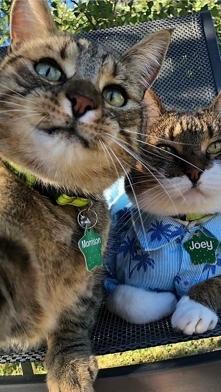 Kociakowe selfie :-)