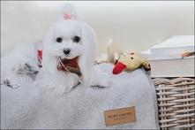 Sweterki zimowe dla psa to ...