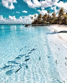 Crystal Clear Water of Mald...