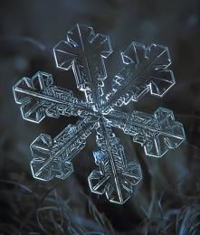 płatek śniegu