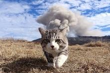 Bombowy koteczek ;-)