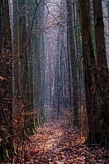 Lasek Marceliński- kawałek prawdziwej przyrody w centrum dużego miasta.