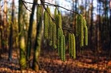 Wiosna wisi w powietrzu i r...