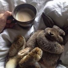 Kawa z pączkiem ;-)