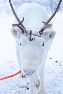 Laponia - co warto zwiedzić?
