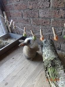 coś na zajęcie dla królików ❤️