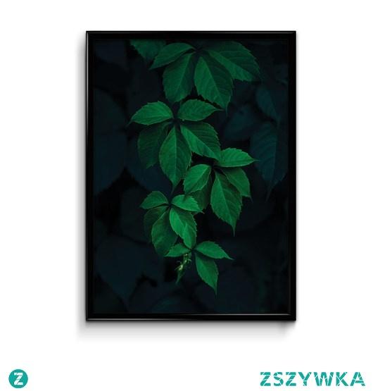 Bluszcz Plakat Botaniczny Na Plakaty Zszywkapl