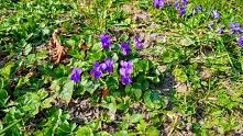 Wiosna budzi się :)