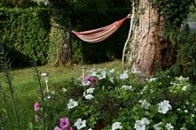 kwiaty, ogród, hamak