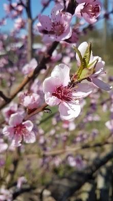 wiosna ❤
