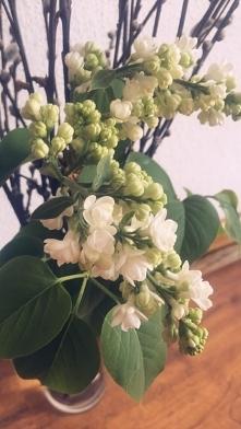 Czy u was też zawitał już ? Kocham się w tym zapachu, jak i magnolii ♡