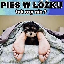źródło obrazu Pinterest Pies w łóżku????