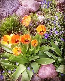 Kolorowo w ogródku #mygarde...
