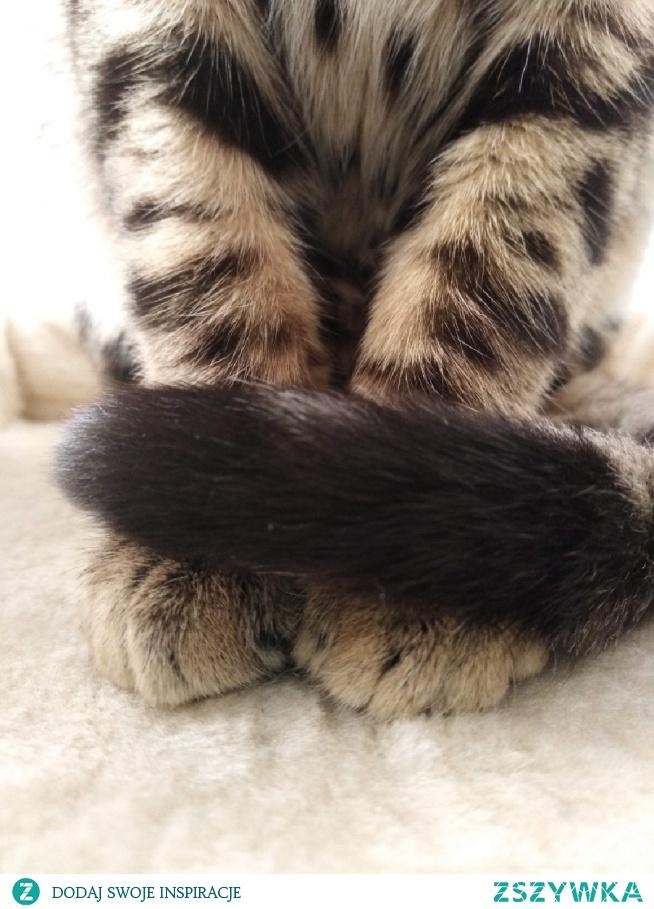 #bengalcat #blackandwhite #amazing #cat #lazzy #lovecats #crazycat #cute #mylove #myboy #redcat #rybnik #instagram