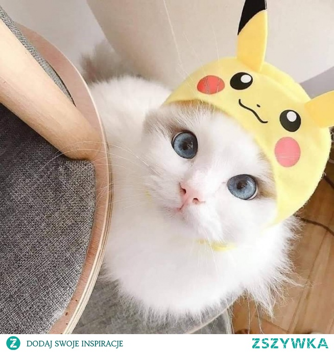 :* wowww.... sweet cat