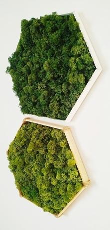 Obrazy z mchu. Zagraj w zielone. Zapraszam na fb: EchMech