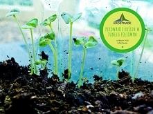 ✅ Pikowanie roślin w tunelu...