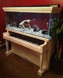 Akwa dla muzyka