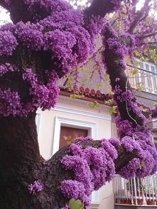 Gdy nie ma miejsca w koronie drzewa a kwiaty do przesady dalej kwitną i kwitn...