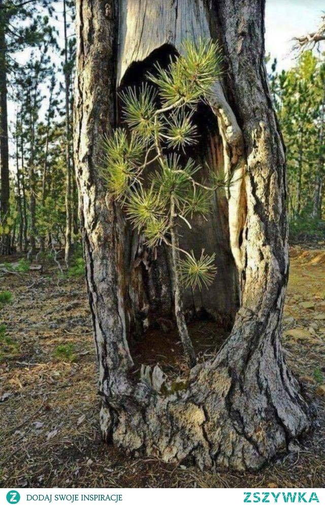 Nie było nas był las, nie będzie nas  będzie las.