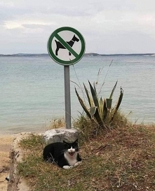 Zakaz nakaz a po lewej pies pływa !