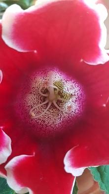Pan z kwiatkiem w kwiatku :)