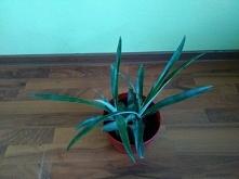 i ananasowe bliźniaczki :)