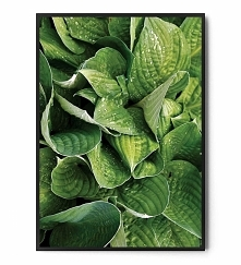 Plakat GREEN PLANTS FOX ART...