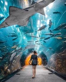 Akwarium w Dubaju, Zjednoczone Emiraty Arabskie, zapraszamy na puzzle <3
