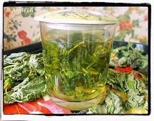 Herbatka wzmacniająca z bluszczyka kurdybanka - Ground Ivy Infusion - Tisana ...