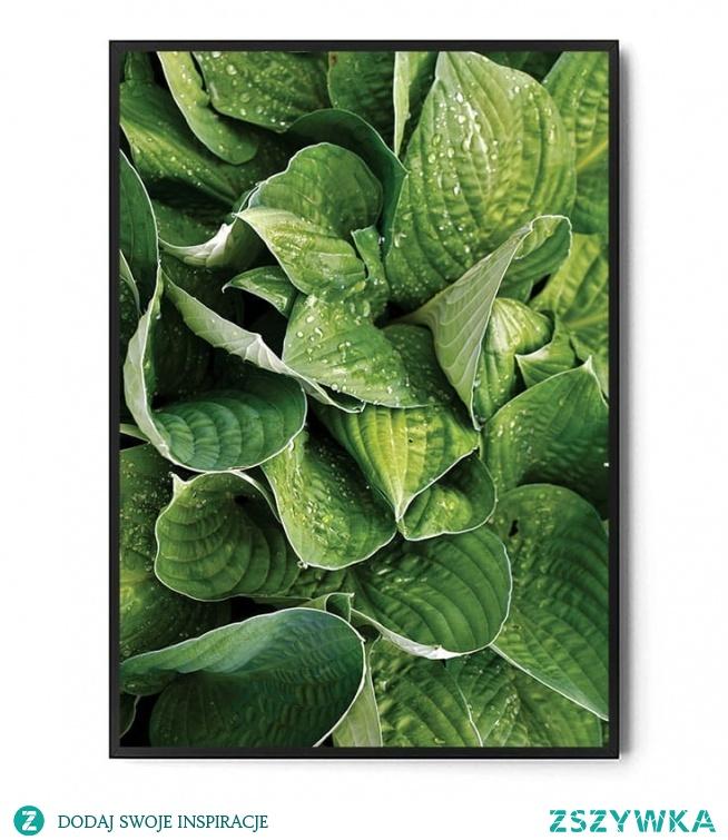 Plakat GREEN PLANTS FOX ART STUDIO