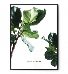 Plakat PURE NATURE Ficus FO...