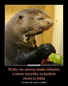 coś na poprawę humoru ;)