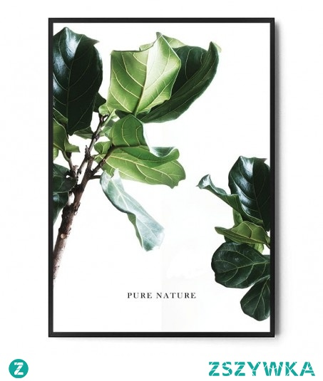 Plakat PURE NATURE Ficus FOX ART STUDIO