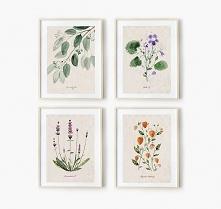 4 ilustracje botaniczne | A3