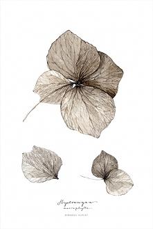 hortensja, print 30x40 cm