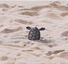 Ten żółw albo wychodzi albo...