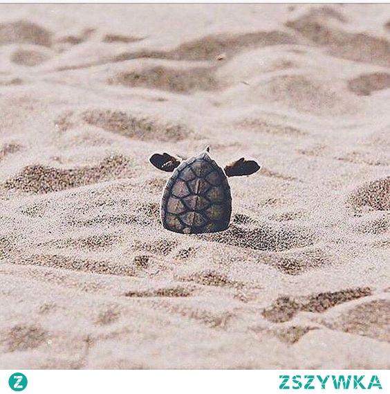 Ten żółw albo wychodzi albo czegoś szuka :D hehe