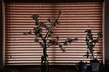 Żaluzje bambusowe w kolorze...