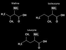 Odpowiednie aminokwasy, a s...