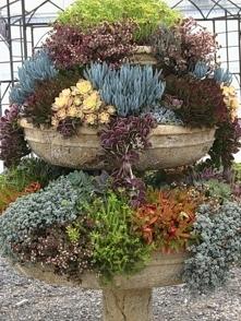 Ogród, kwiaty, donica, skalniak