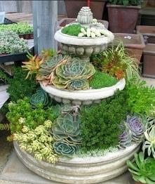 Donica, skalniak, sukulenty, kaktusy, ogród, garden