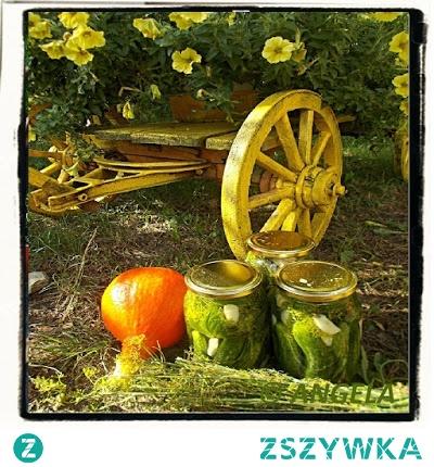 Ogórki kiszone tradycyjnie - Sour Cucumbers Recipe - Cetrioli in salamoia