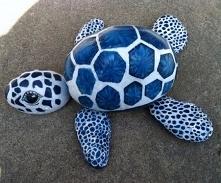Żółw kamień.