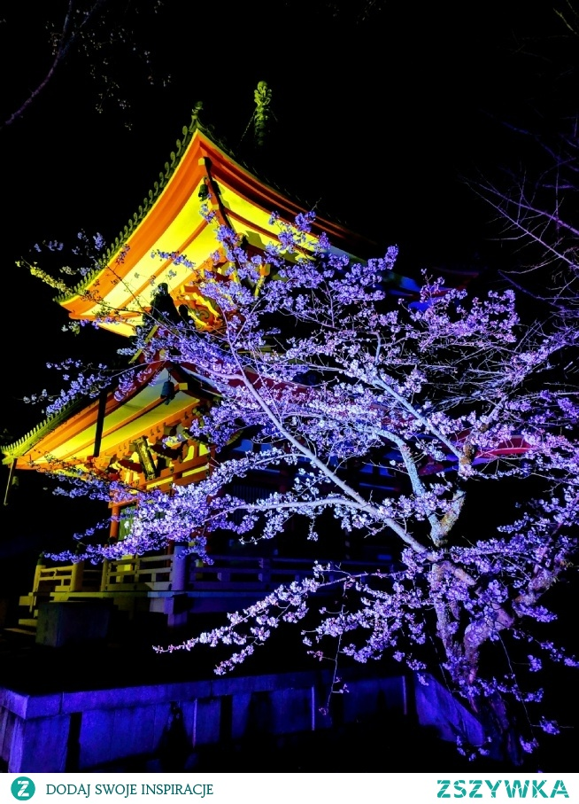 Kwitnące wiśnie nocą, Kyoto - Japonia
